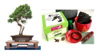 Premium Bonsai Kit in Gift Box (Chinese Juniper) 8Piece - Includes CERAMIC Pot